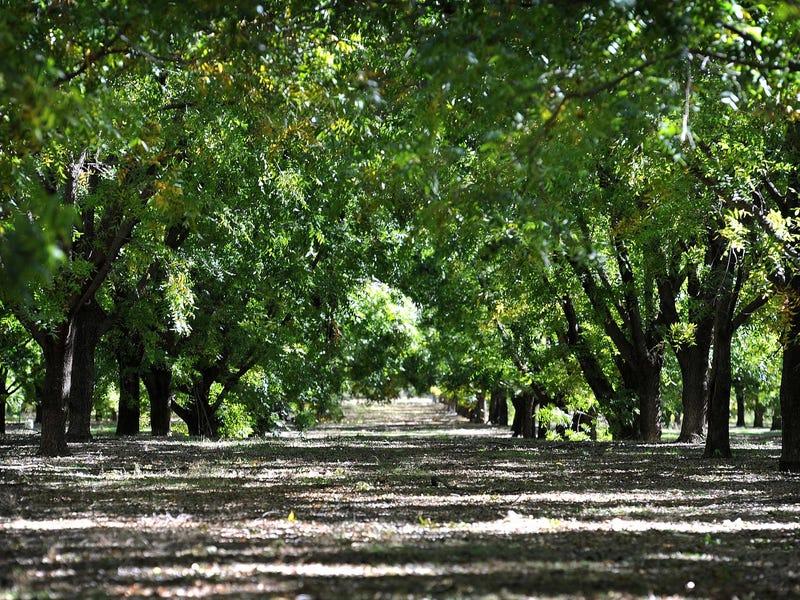 294 ORMANS LANE, Kootingal, NSW 2352
