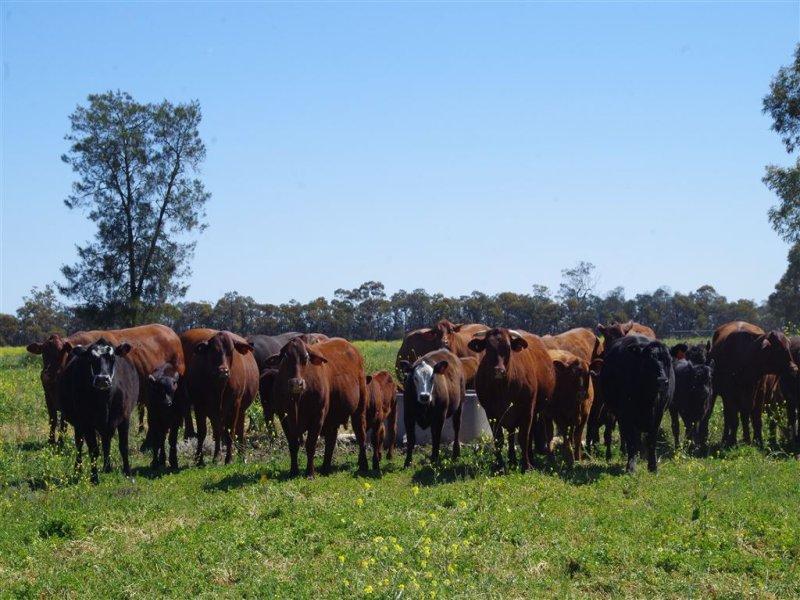 556 Glenwood Lane, Narrabri, NSW 2390