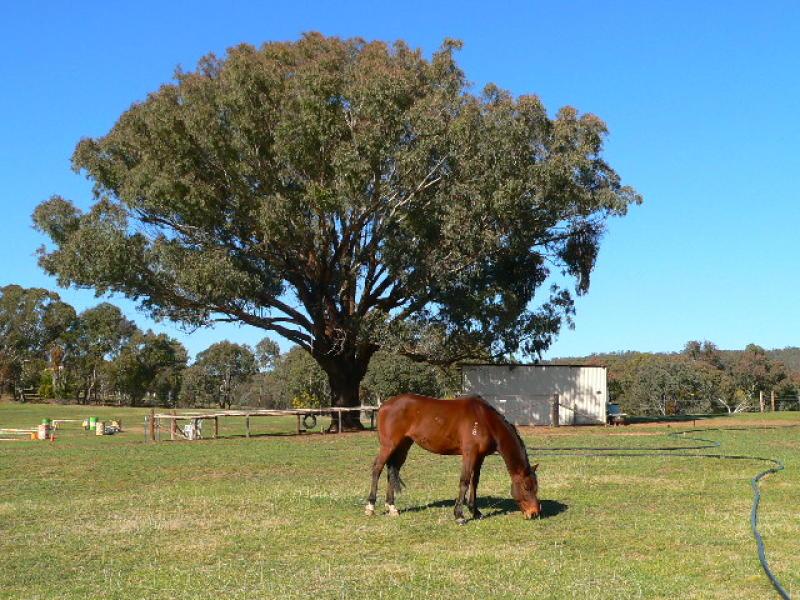 2412 Burrendong Way, Mullion Creek, NSW 2800