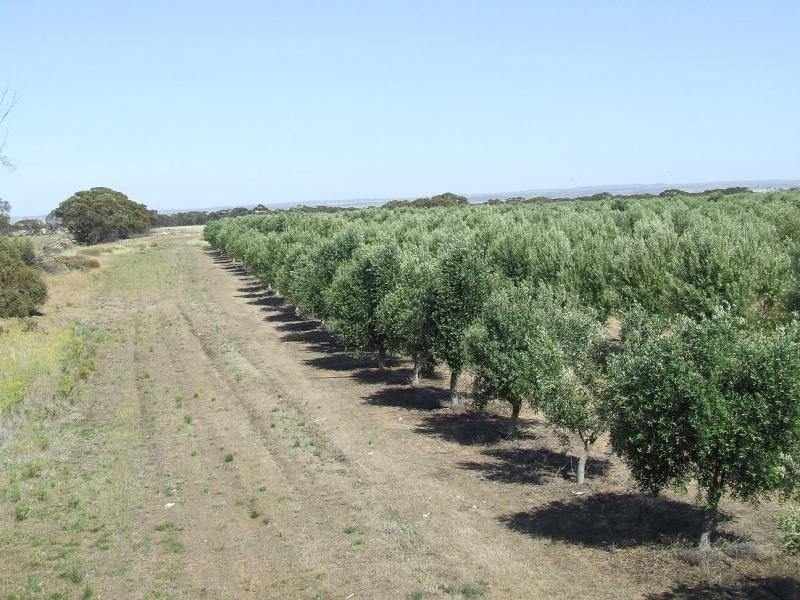 . White Hut Olives, Mypolonga, SA 5254