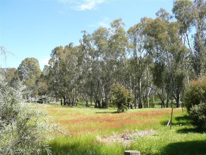 52 Pimpala Crescent, Mulwala, NSW 2647