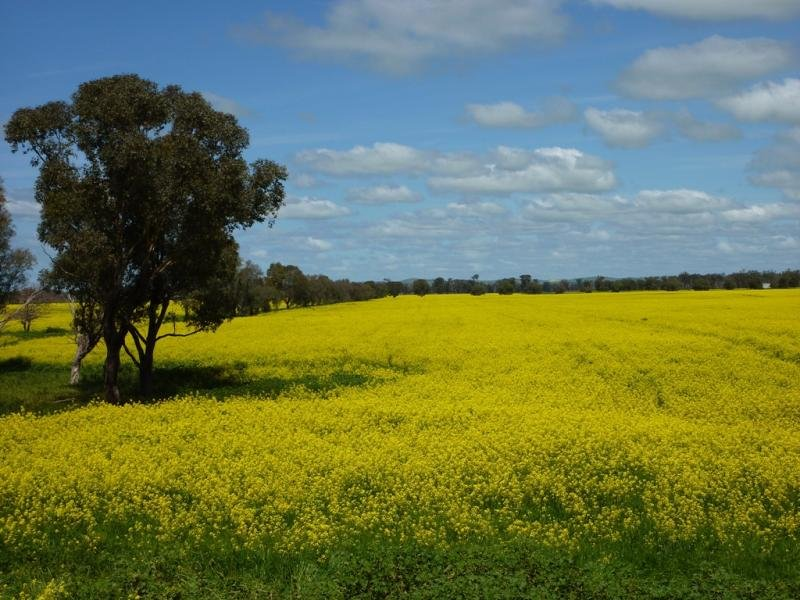 - Bethungra rd, Eurongilly, NSW 2663