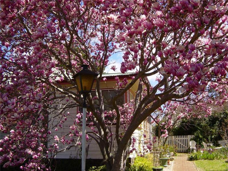 88 Macquarie Street, Glen Innes, NSW 2370