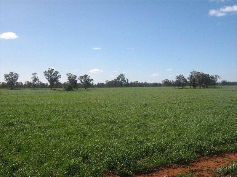 ". ""South Lancoona"", Hillston, NSW 2675"
