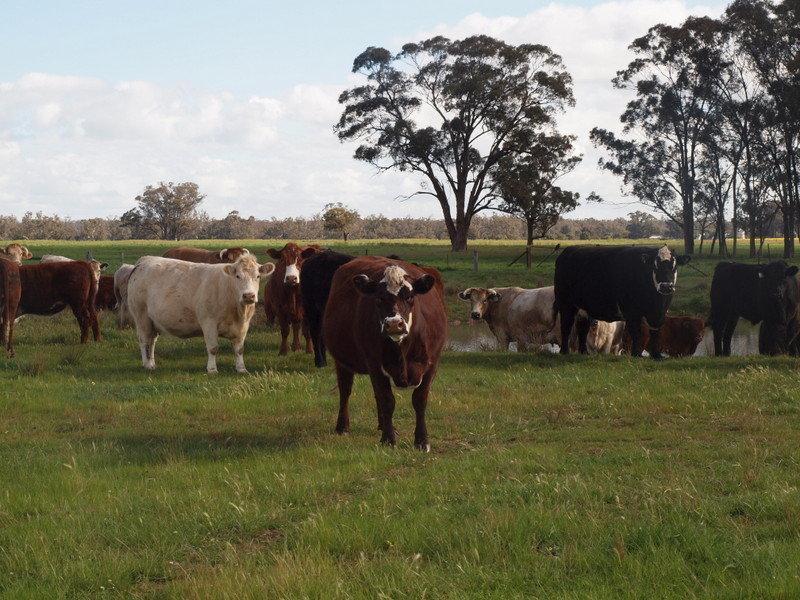 - Yallambi, Bribbaree, NSW 2594