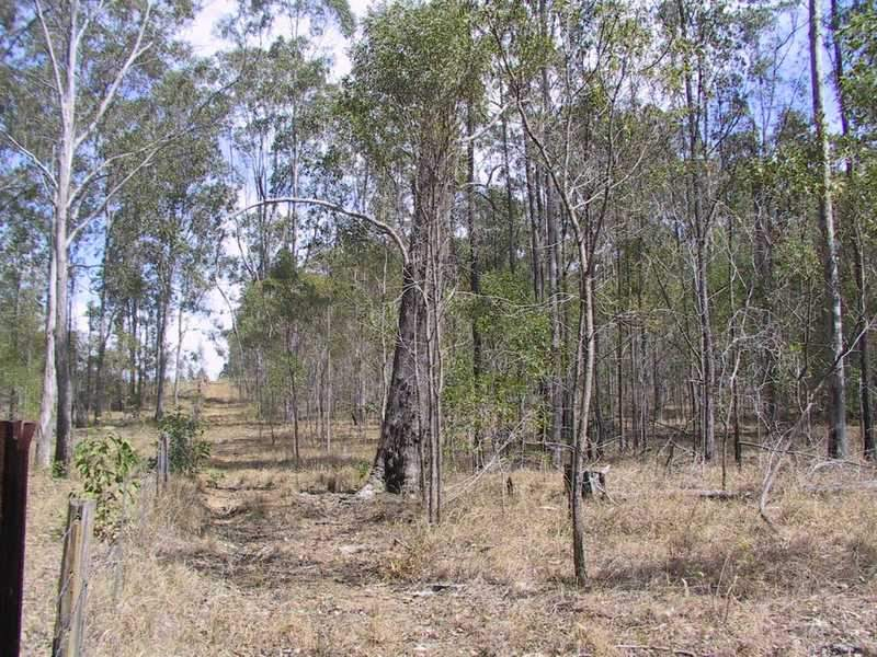 Tatham-Myrtle Creek Road, Ellangowan, NSW 2470