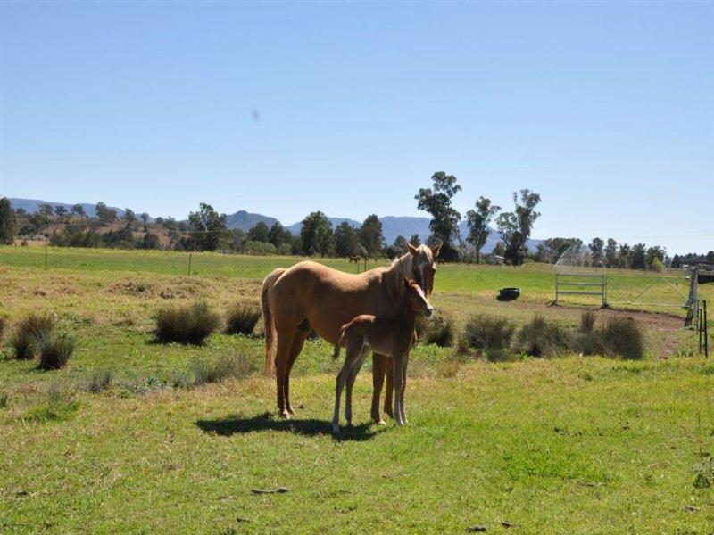 """2A Roach St """"The Bottom Farm"""", Parkville, NSW 2337"""
