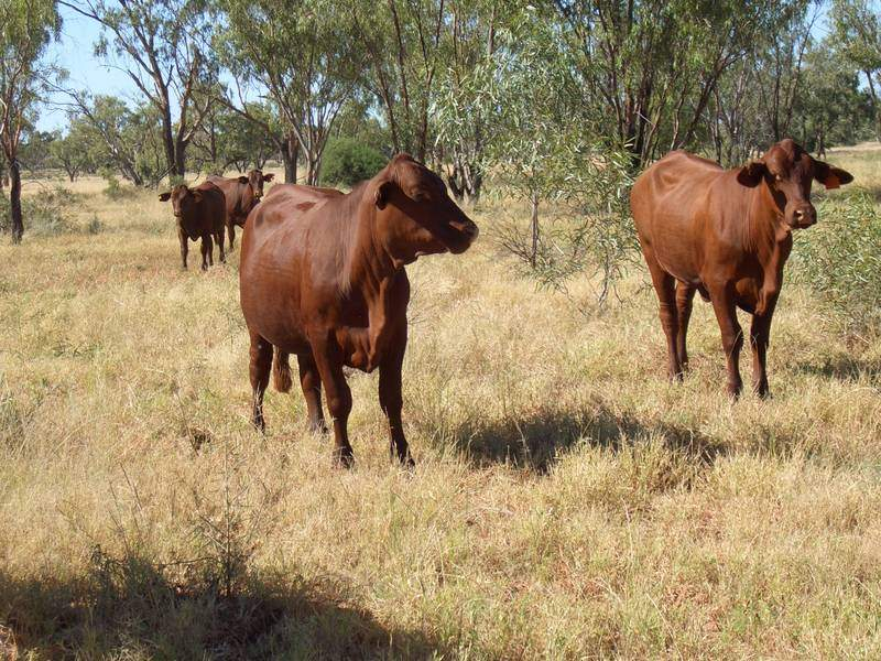 SW QUEENSLAND GRAZING PROPERTY, Charleville, Qld 4470