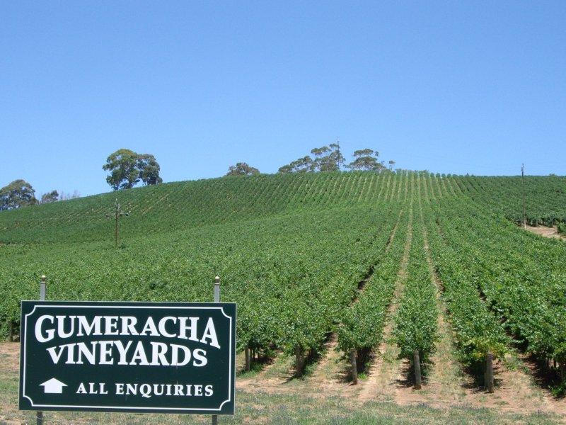 Gumeracha Vineyard, Gumeracha, SA 5233