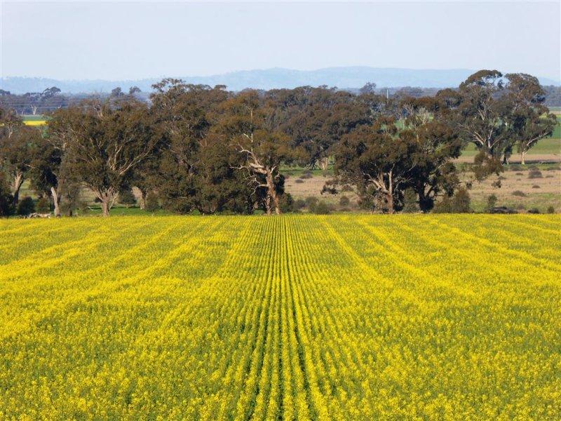 'Sanger' Corona Rd,, Corowa, NSW 2646