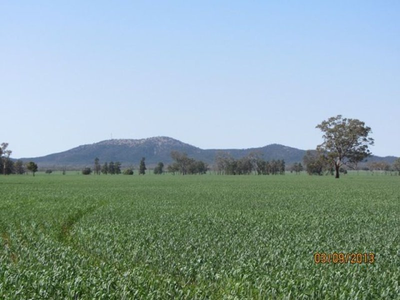 * Currawalla, Condobolin, NSW 2877