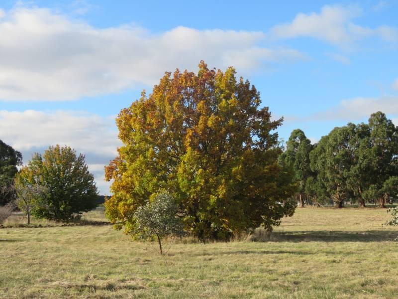 3660 Ballarat-maryborough  Road, Clunes, Vic 3370
