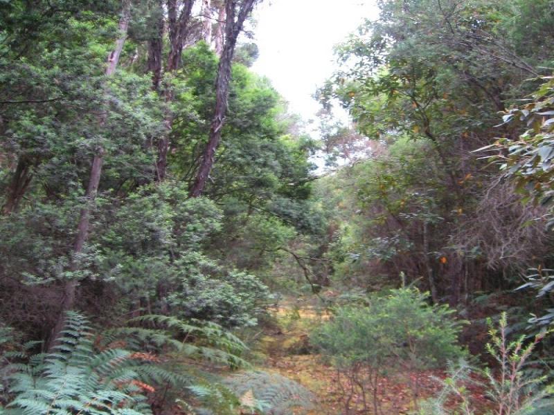 0 Pegarah Road, Naracoopa, Loorana, Tas 7256