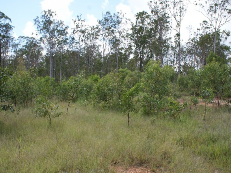 Lot 4 Alpha Plantation Road, Tinana South, Qld 4650