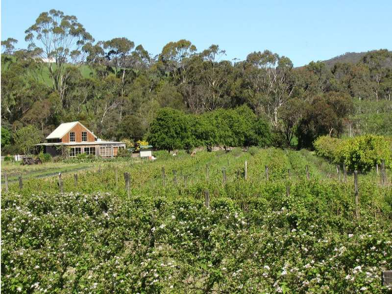 Gentle Annie Berry Gardens., 520 Pennyroyal Valley Road, Deans Marsh, Vic 3235