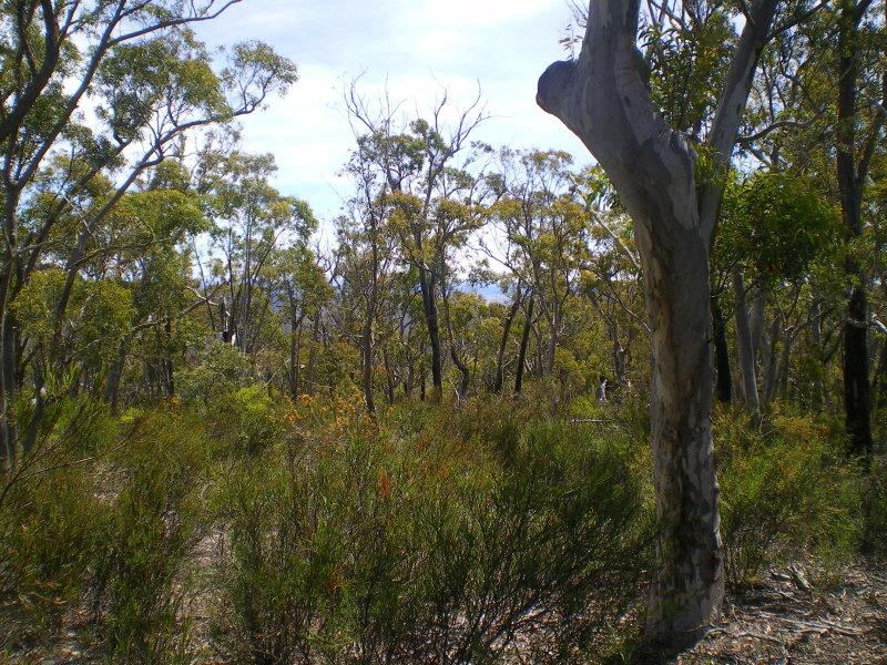 Lot 4, Peak View Road, Numeralla, NSW 2630