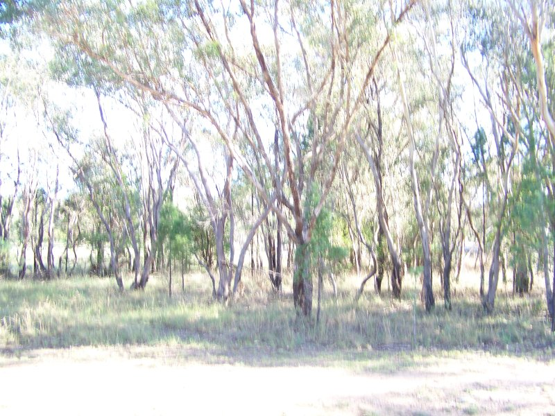 Lot 153, Ropers Road, Binnaway, NSW 2395