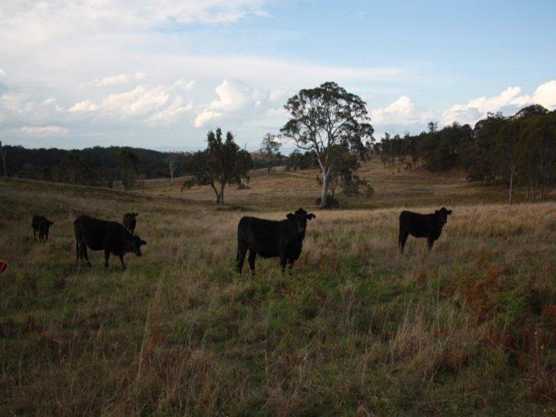 168 Cullendore Creek Road, Cullendore, NSW 2372