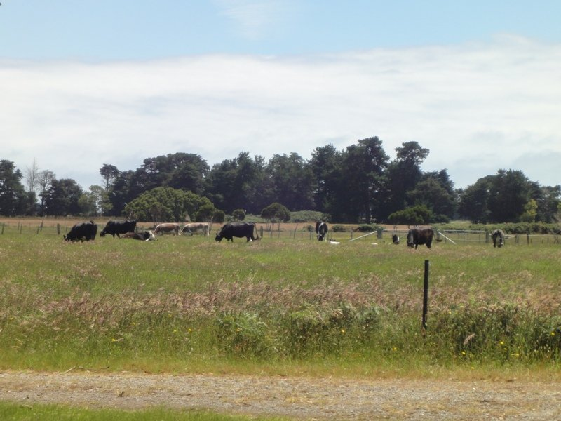 1416 Greens Beach Road, Kelso, Tas 7270