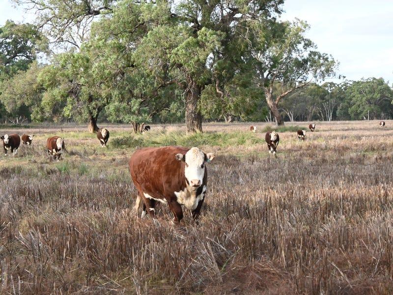 'Riversdale' Castlereagh Hwy, Mendooran, NSW 2842