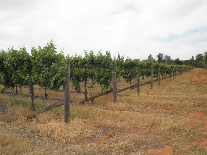 66 Oleander Drive, Dareton, NSW 2717