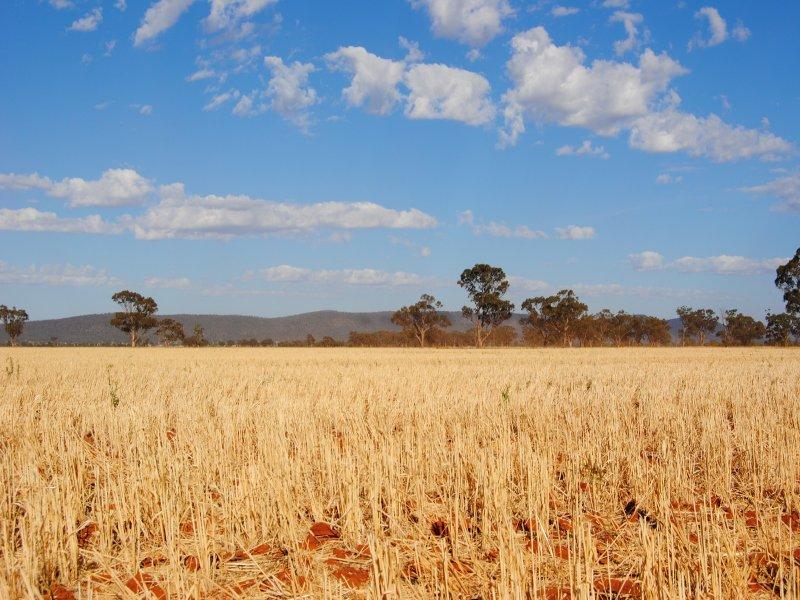 """""""The Plains"""" (Cruickshanks), Monia Gap, NSW 2675"""