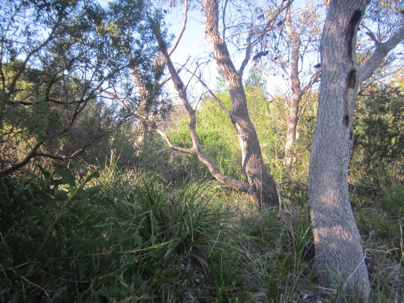1277 Shoreline Drive, Glomar Beach, Vic 3851