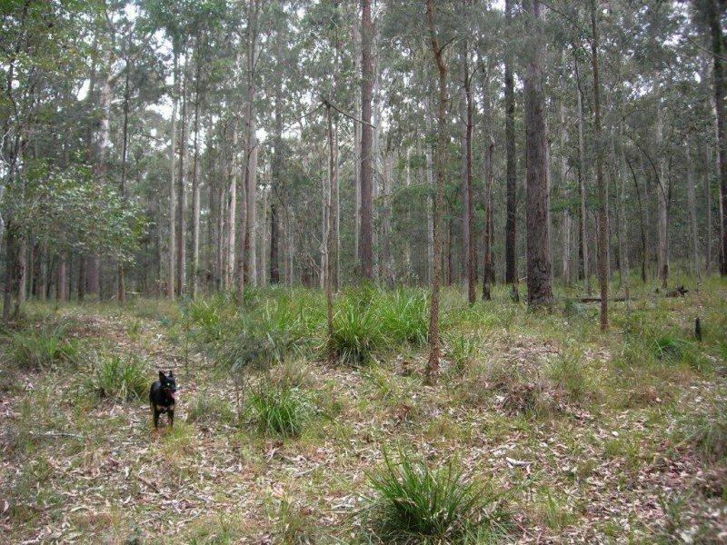 Lot 15 Woods Road, Jilliby, NSW 2259