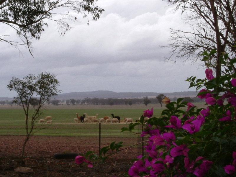 1 Wildwood, Ardlethan, NSW 2665