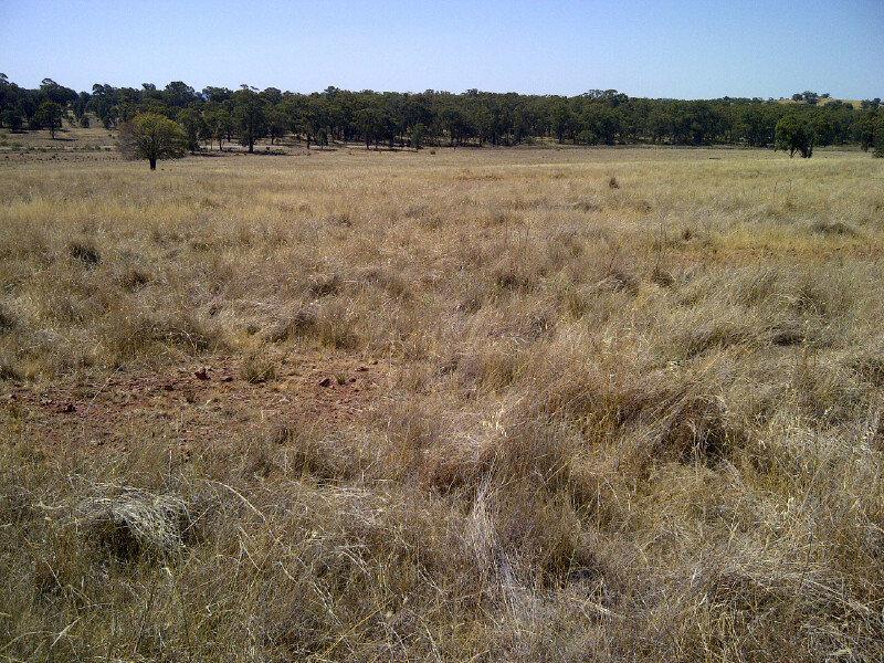 Eugowra Rd, Parkes, NSW 2870