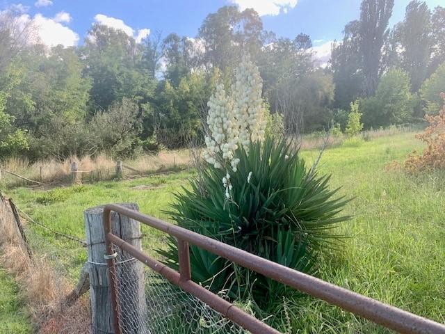 97 CAROLINE STREET, Bendemeer, NSW 2355