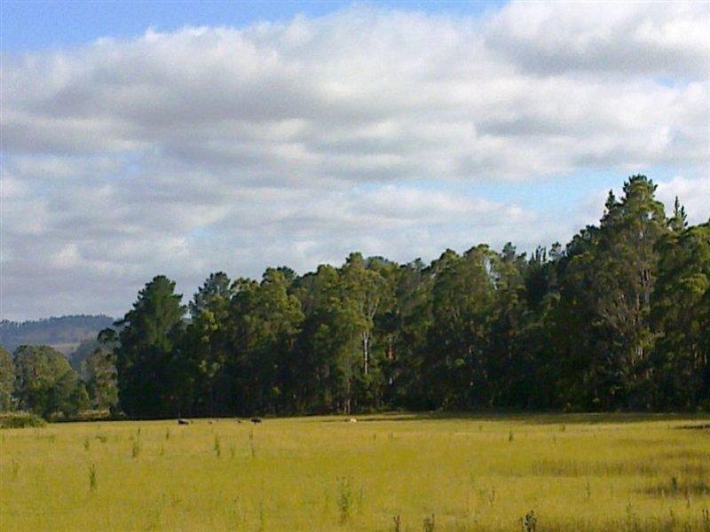 815 Western Creek Road, Dairy Plains, Tas 7304