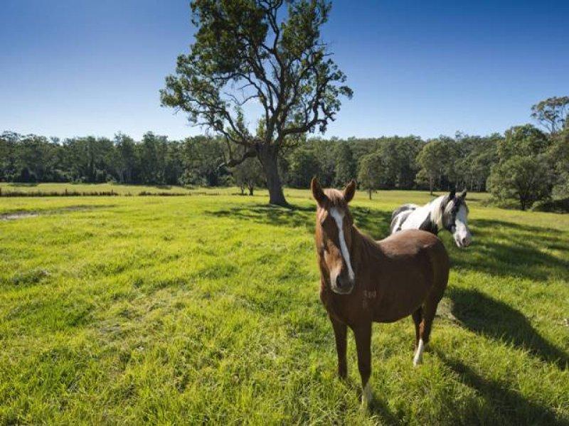 Lot 4 Kangaroo Creek Road, Kangaroo Creek, NSW 2460