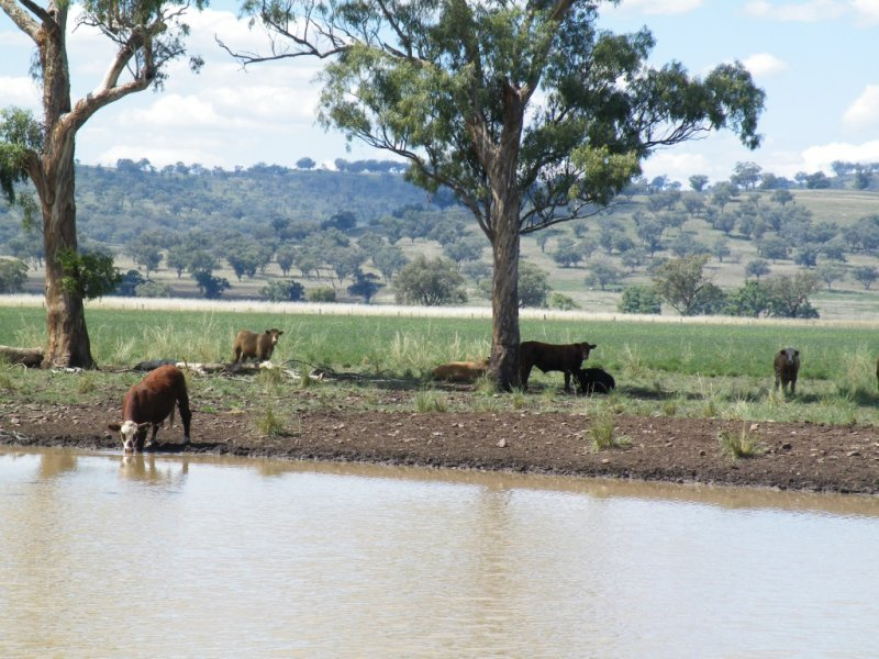 ". ""Eloura"" Swinging Ridges Road, Warrah Creek, NSW 2339"