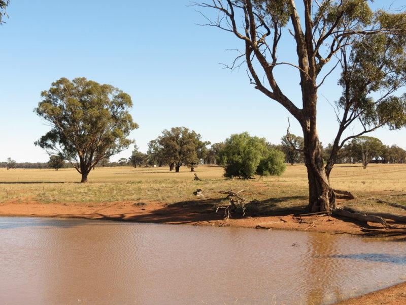 581 Slingers Lane, Temora, NSW 2666