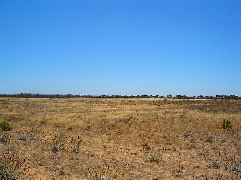 Sec 729 Lynch Lane, Mypolonga, SA 5254