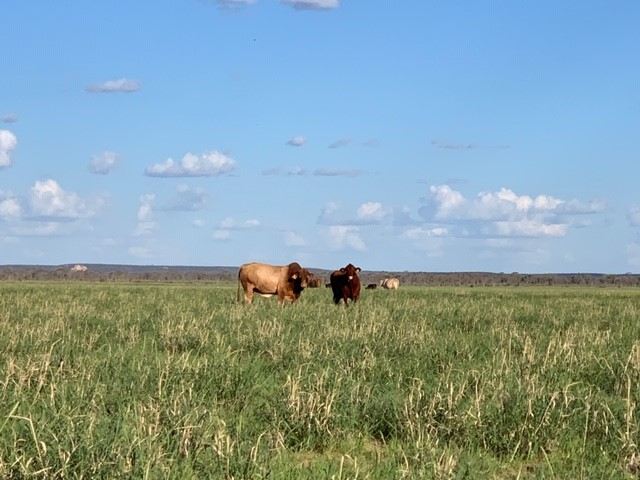 """"""" Canaway Downs"""", Quilpie, Qld 4480"""