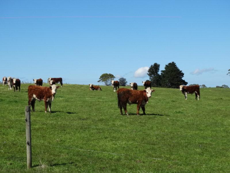 474 Mount Hicks Road, Mount Hicks, Tas 7325