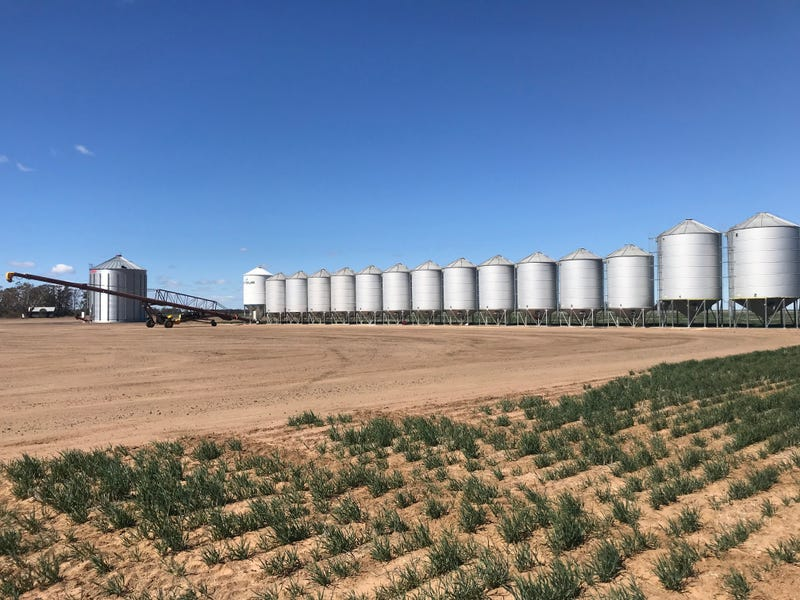 Grainfields, Croppa Creek, NSW 2411