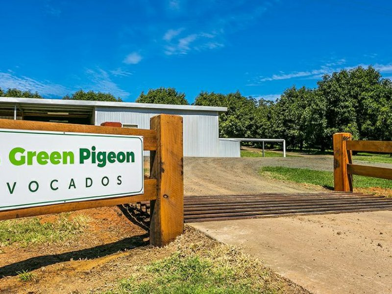 702 Green Pigeon Road, Green Pigeon, NSW 2474