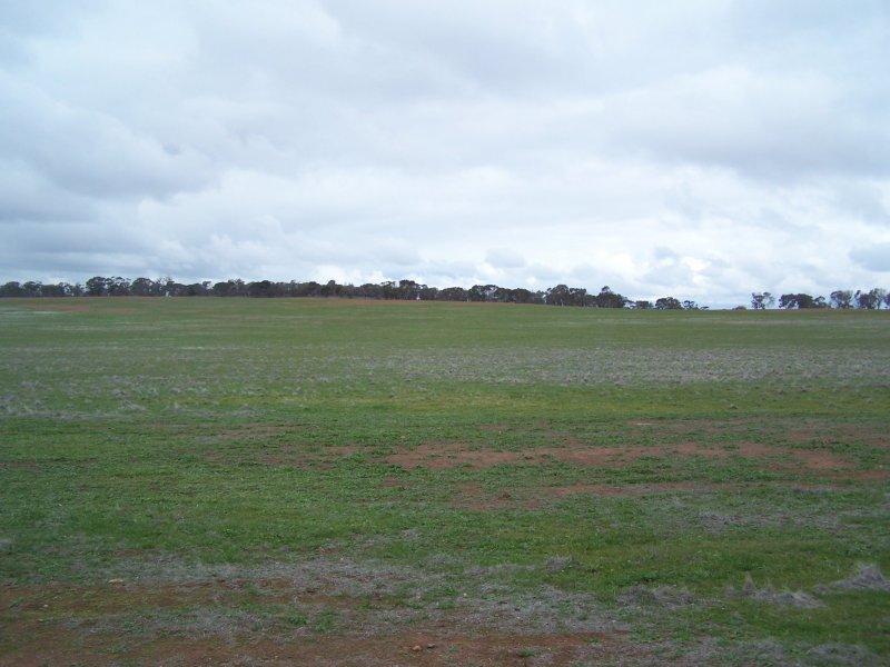 Rosebank, Wyalong, NSW 2671