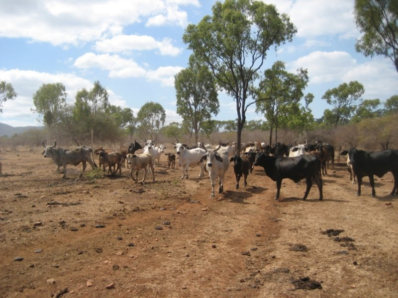Lot Bruce Highway, Inkerman, Qld 4806