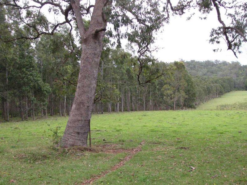 - Pigman Road, Dyraaba, NSW 2470
