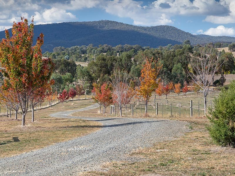 2923 Myrtleford-Yackandandah Road, Yackandandah, Vic 3749