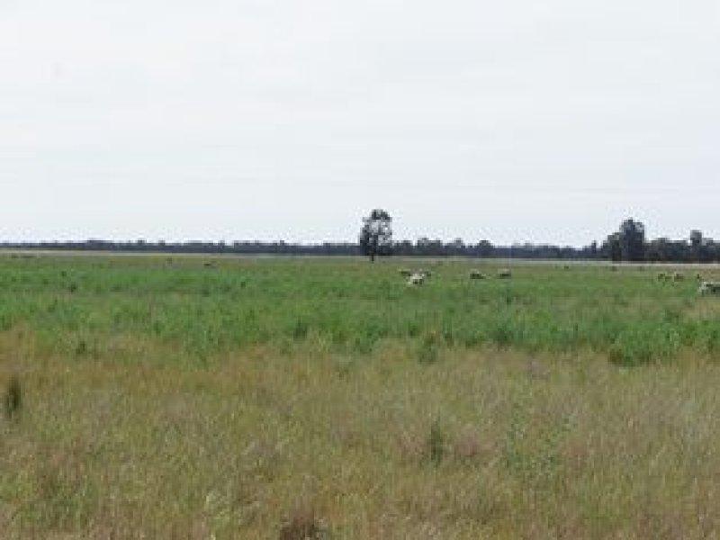 . Pinehurst Aggregation, West Wyalong, NSW 2671