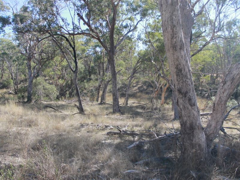 Lot 29 Gulf  Road, Emmaville, NSW 2371