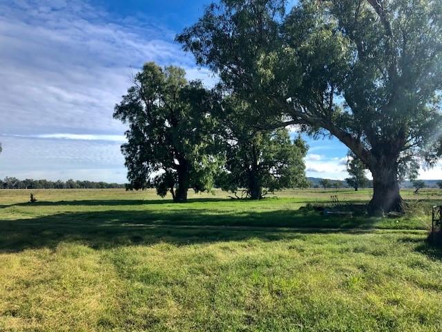 Willow Lea, Texas, Qld 4385