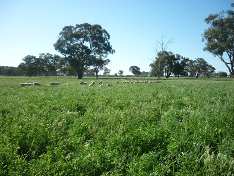 Lot 2 Anderson, Moama, NSW 2731