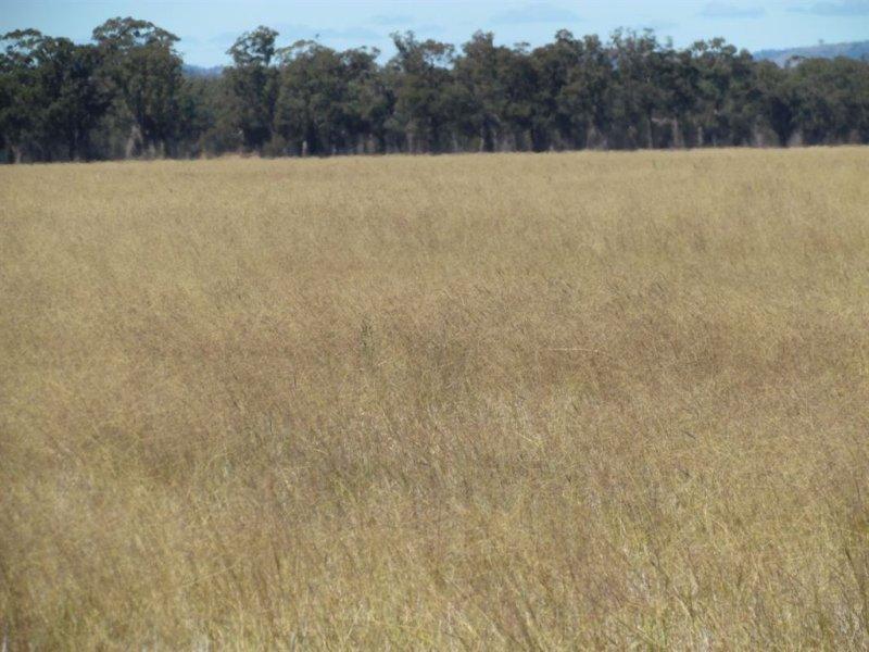 """1460 """"Pinnacle North"""" Pinnacle Road, Grenfell, NSW 2810"""