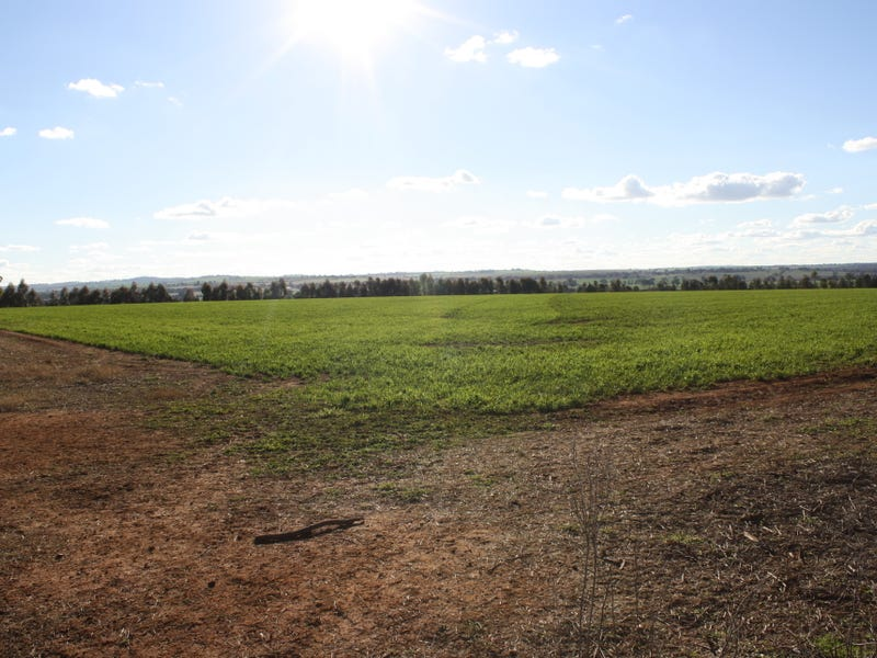 Lot 7 Roedigers Lane, Junee